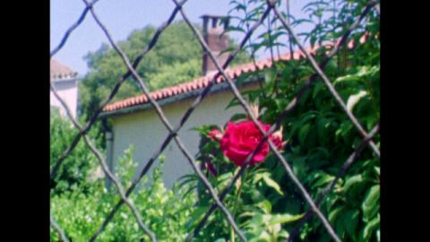 Image_Rose_02